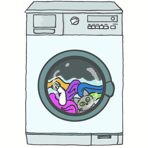 pause lave linge et lave chaton par la m 234 me occasion une pause s impose