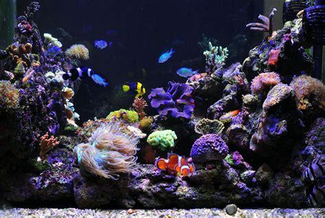 trucs et astuces pour d 233 marrer aquarium d eau de mer