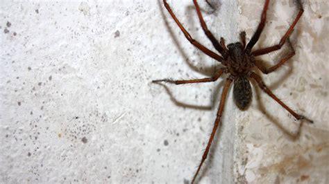 lutter contre les araign 233 es chez vous toutes nos astuces