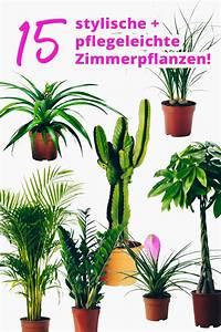 Pflanzen Für Wohnzimmer : der pflanzen guide 15 stylische und pflegeleichte zimmerpflanzen ~ Markanthonyermac.com Haus und Dekorationen