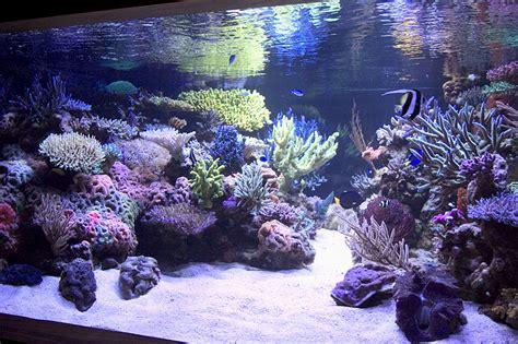 reef aquarium aquascape designs my manly fish beat up your quot manly quot f i s h aquarium ideas