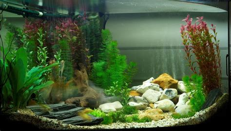 setting up freshwater aquarium live plants aquarium design ideas