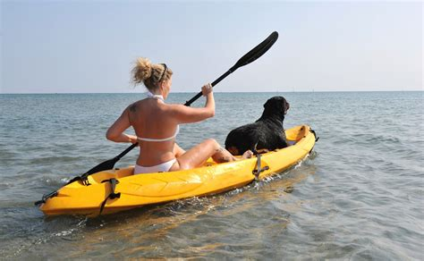 Dog Boat Seat by Pet Travel Tips For Holidaying With Your Pet
