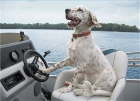 Boat Driving Dog by Boat Safety For Dogs The Ten Commandments Of Boating And