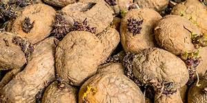 Kartoffeln Und Zwiebeln Lagern : weniger verschwendung von schweizer kartoffeln eth z rich ~ Markanthonyermac.com Haus und Dekorationen