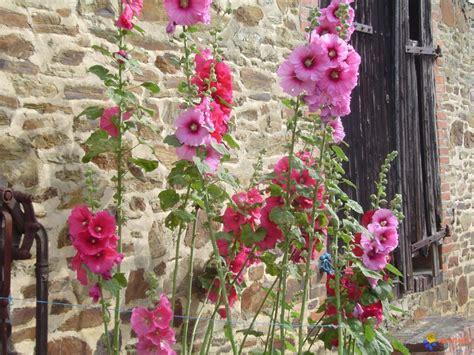 photo roses tr 233 mi 232 res