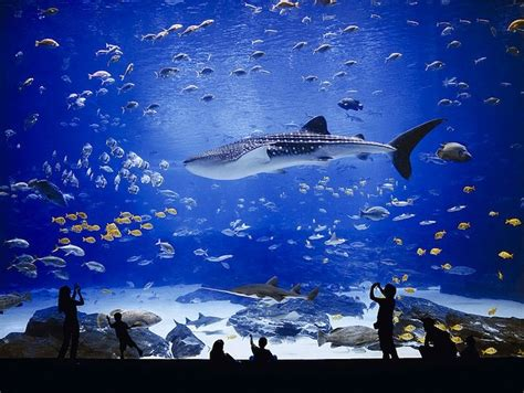 68 best images about at aquarium on aquarium sharks and whale sharks