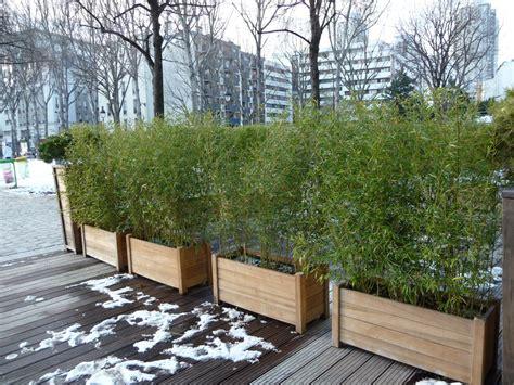 bambous en pot c 244 t 233 jardin