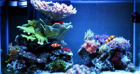 nor cal nano 2012 featured nano reef aquariums nano reef community