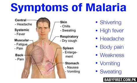 Symptoms Of Malaria And Prevention  Baby First Pakistan. Females Only Signs. Taurus Signs. Attendance Signs Of Stroke. Skin Cancer Signs. Isosceles Signs Of Stroke. Airport Lounge Signs Of Stroke. Pylon Signs. Arm Signs