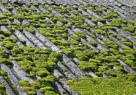 Green Moss On Grey Vintage Tiled Roof, Stock Photo