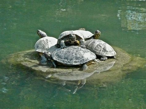 the best turtle dock for large turtles turtleholic