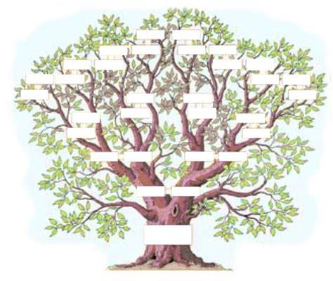 l arbre g 233 n 233 alogique exercice arbres g 233 n 233 alogiques g 233 n 233 alogie et exercices