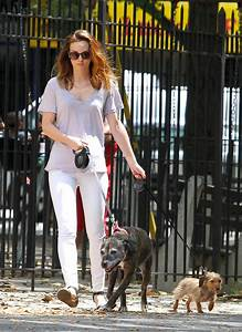 Leighton Meester Takes Her Pups for a Walk Picture ...