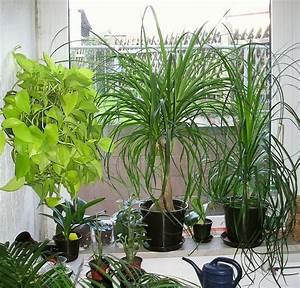 Feng Shui Pflanzen Reichtum : pflanzen begutachten ~ Markanthonyermac.com Haus und Dekorationen
