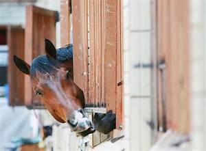 Wie Streiche Ich Richtig : wie reinige ich meine pferdebox richtig tierheilkunde ~ Markanthonyermac.com Haus und Dekorationen