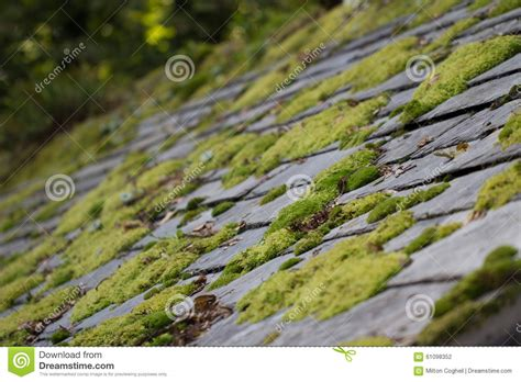 Moss On Roof Tiles Stock Photo Kool Seal Roof Coating Directions Types Tiles Uk Foam Roofing Contractors Bay Area Rooftop Bars New York City Midtown 2 Best Of Vents Tin Patio Plans Mitsubishi Lancer Rack Cover Absolute Cleveland Ohio