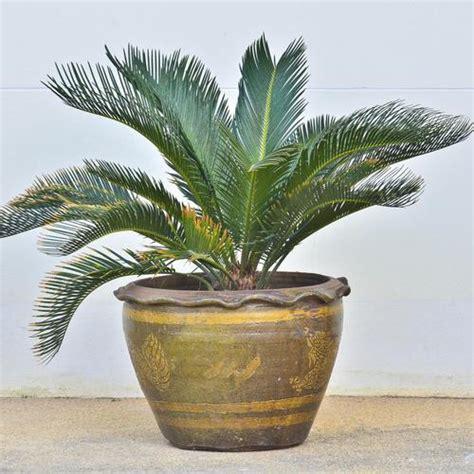 plante en pot exterieur plein soleil 28 images les 25 meilleures id 233 es concernant
