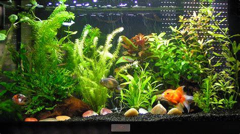 decoration aquarium poisson id 233 es de d 233 coration et de mobilier pour la conception de la