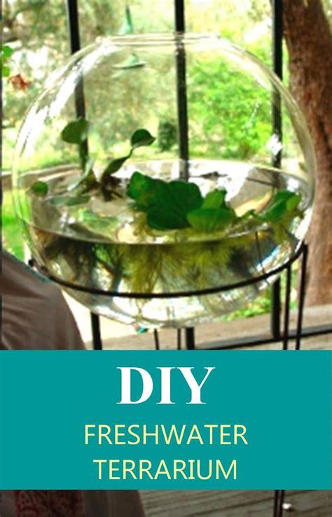 17 meilleures id 233 es 224 propos de aquarium d eau douce sur aquarium aquascaping et