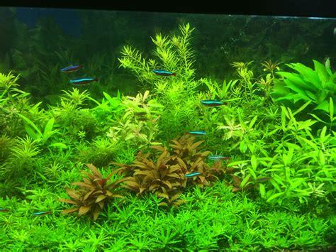 aquarium d eau douce l aquariophilie pour les poissons d eau douce