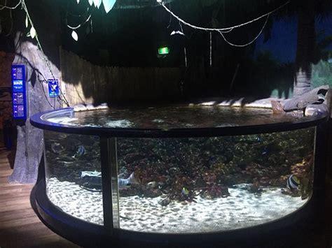 aquarium sea val d europe photo de aquarium sea val d europe marne la