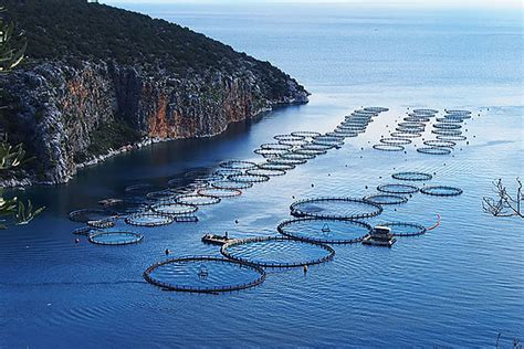 Biggest Boat Manufacturers In The World by Seaworld Wants To Build The World S Biggest Fish Farm