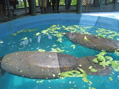seaquarium picture of miami seaquarium key biscayne tripadvisor