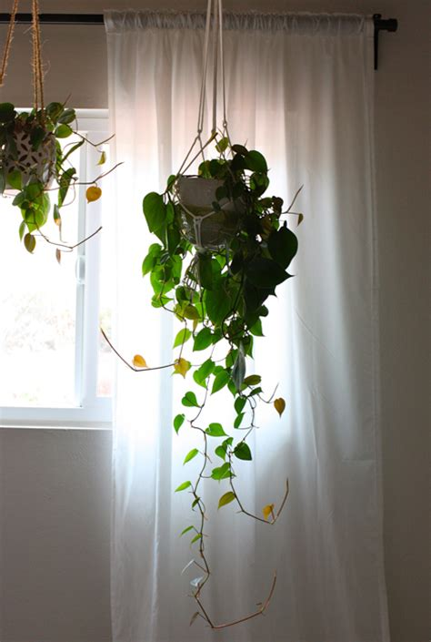 Indoor Hanging Baskets Decoracin Per Part With Indoor. Classic Fence. Rectangle Chandelier Lighting. Acrylic Kitchen Cabinets. Vintage Style Kitchen Faucets. Decorative Bowls For Coffee Tables. Pendant Lighting Over Island. Rock Crystal Chandelier. Best Time To Plant
