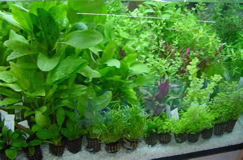 plantsdiscus