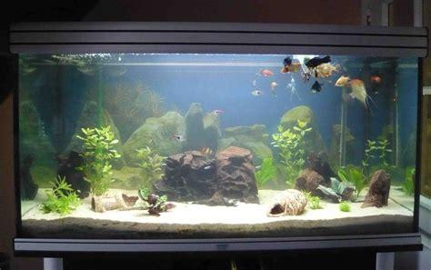 choix d un aquarium quelques exemples et photos guide