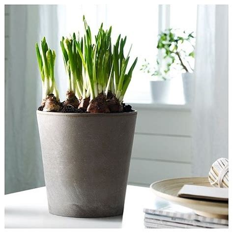 mandel plant pot contemporary indoor pots and planters by splendid willow