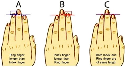 2e Hands Zodiac by Shocking Things Your Finger Length Reveals About Your