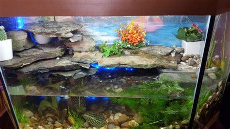 information sur tortue de floride identification et maintenance des tortues aquatiques