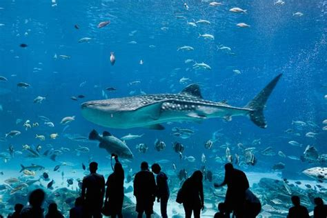 the largest aquarium in the world aquarium ritemail
