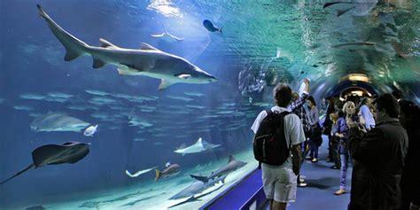 4 superbes aquariums pour des balades sous marines