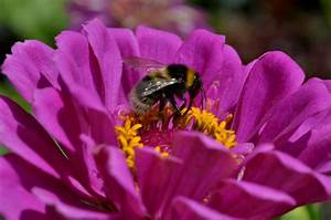 Garten Blumen Pflanzen : pflanzen und blumen im garten seite 3 ~ Markanthonyermac.com Haus und Dekorationen