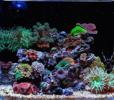 teenyreef 2015 featured aquariums featured aquariums monthly featured nano reef aquarium