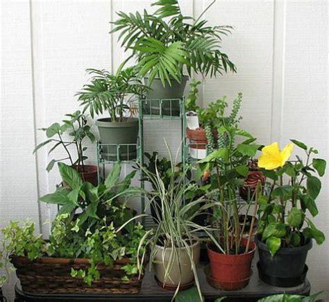 Indoor Gardening  Indoor Plants  Flower Garden
