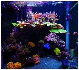 marine aquarium ideas small aquarium ideas 2017 fish tank maintenance