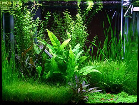 aqua store utiliser le co2 dans l aquarium d eau douce plant 233