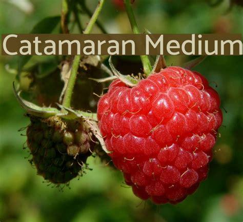 Catamaran Bold Font Free Download by Catamaran Medium Font Comments