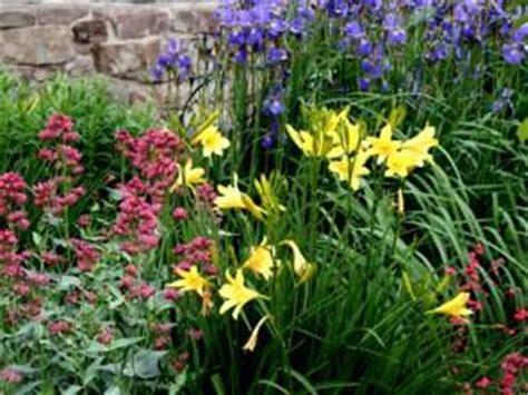 que ce soit une fleur annuelle ou vivace traiter la avec le meilleur engrais qui soit 192 voir