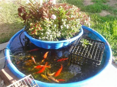 Amazing Food Producing Aquaponics Systems