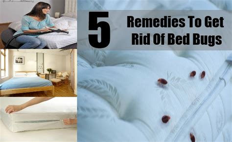 5 Best Remedies To Get Rid Of Bed Bugs What Causes Sudden Blindness In Young Dogs Color Blind Test Numbers Eyesight Prescription Legally Curved Track Vertical Blinds Blindfold Terraria Living With Roman Uk Dunelm Is
