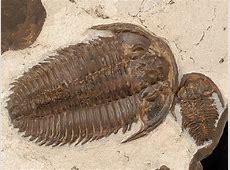 Arthropod Fossils 101 02042017 Missoula, Montana