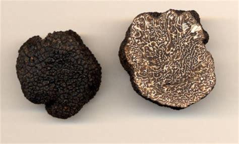truffe maison des truffes boncourt sur meuse