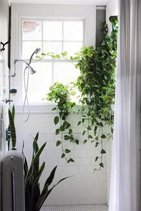 vines shower square white tile window in shower snake plant or maybe sansevieria for