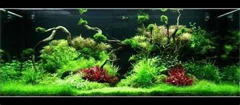 comment r 233 aliser un aquarium aquascape pour un 300 litres