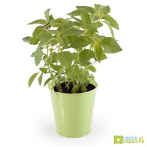 jardiner en pots de culture sur votre balcon c est facile radis et capucine